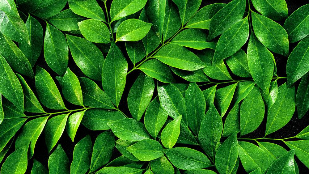 Leaves_1.jpg
