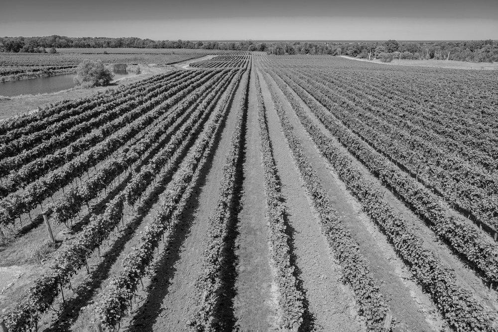 farm fields.jpg