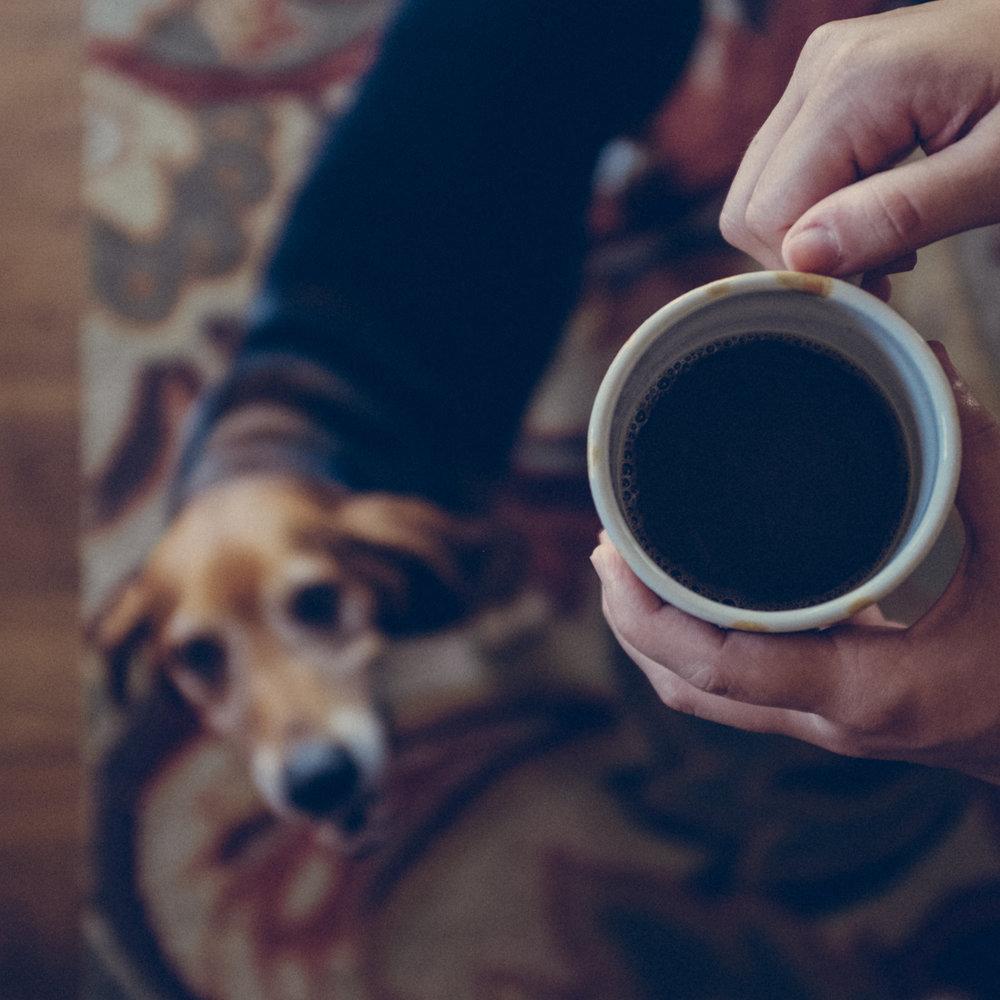 Dog-and-Mug.jpg