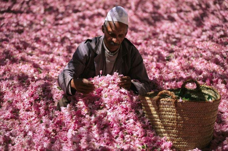 marrocos-morocco-rose-valley-vale-das-rosas.jpg