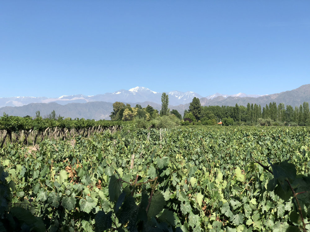 View of the Andes.