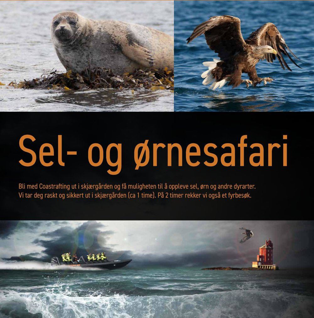 Sel ørnesafari PDF Coastraftingno2019.jpg