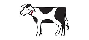 dairy-cow-redhead.jpg