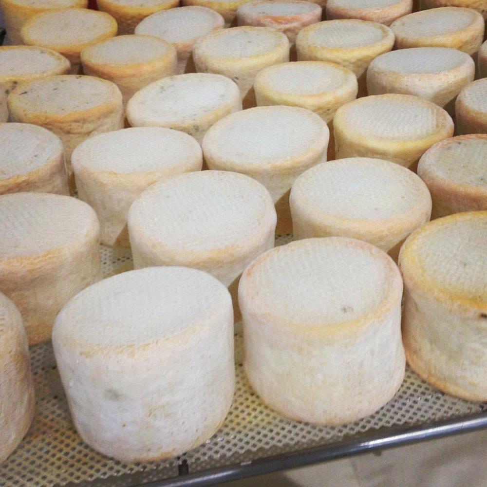 munster-cheese-many.jpg