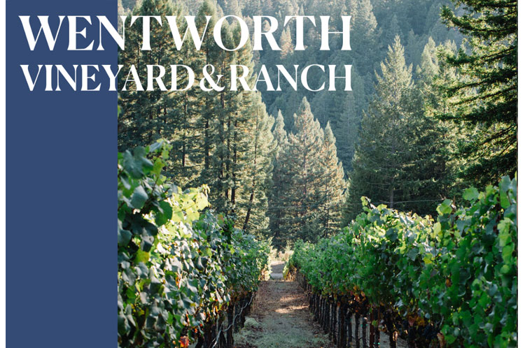 Nash-Mill-Vineyard_Wentworth-Ranch.jpg