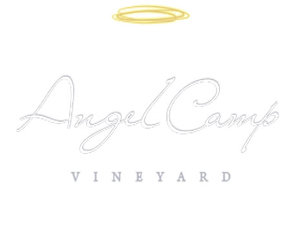 Angel-Camp_LOGO-464x348.jpg