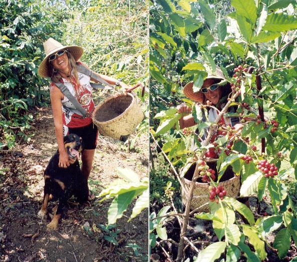 Hawaii_03_Coffee.jpg