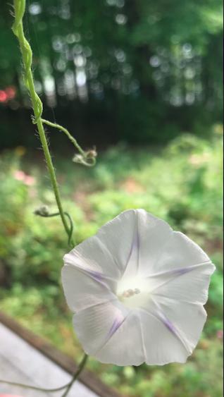 Screen Shot 2018-08-23 at 11.43.15 AM.png