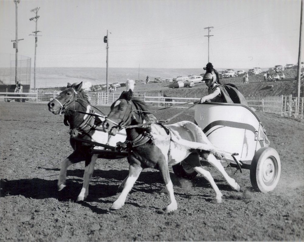 "Nip and Tuck lead their chariot around the Rodeo Arena at Jeffco Fairgrounds, 1960.  ""They loved to run.""  Westernaire Cheryl Arrington (who was deceivingly small for the amount of strength she had) was adroit at keeping the pair in line."