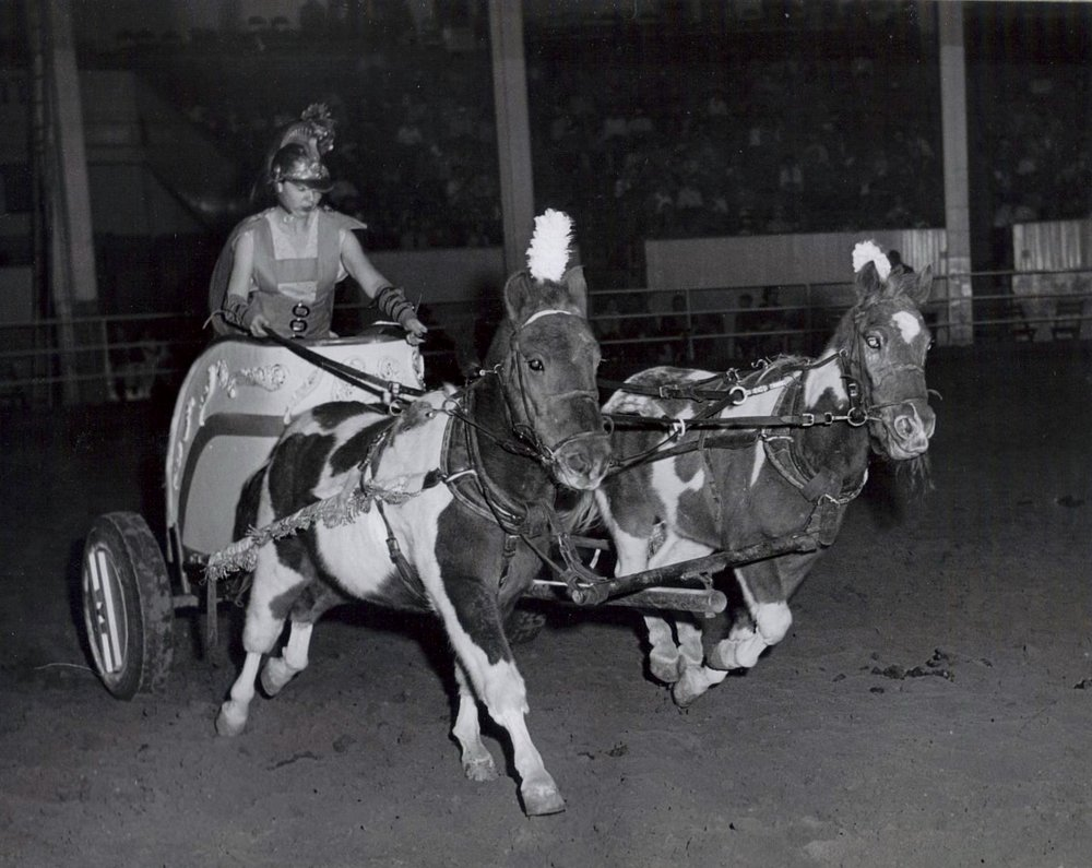 "Cheryl Arrington with Nip and Tuck leading the charge at the 1960 Annual Show ""Horsecapades"".  This team was fast, and very willful."