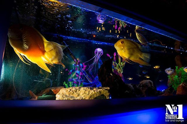 No1 takes care of our customers and our fishes! #Fish #Aquarium #freshwaterfish #Tropical #Brighton #Bar #cocktails #Cocktail #Latelounge #Sussex #Nightlife #No1 #one #no1middlestreetbar #Seasidepleasure #Party #Dance #Drink #Exclusive #VIP #welovebrighton #dresstoimpress
