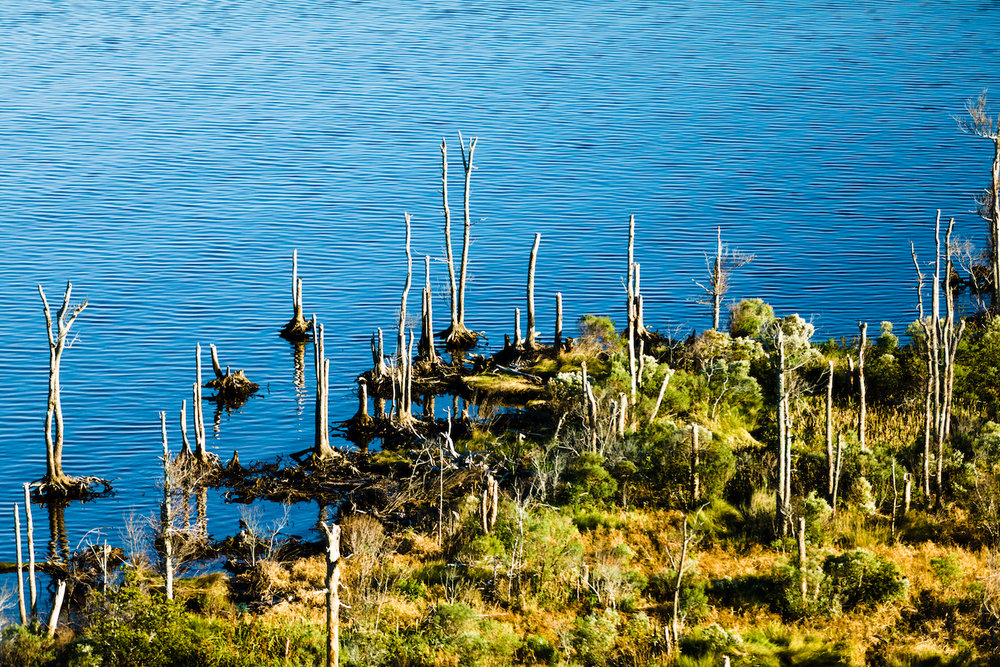 """One of the biggest changes I've noticed is probably the dead pine trees on points of land from rising salt water. I noticed how they were declining recently. The pine trees are dying and it's not just erosion of the land from storms, it's saltwater intrusion. I've counted those trees. Three years ago there were 58 live pines. Last year there were 30 live pines. There are about 13 live pines right now."" - Penny H., Smyrna"
