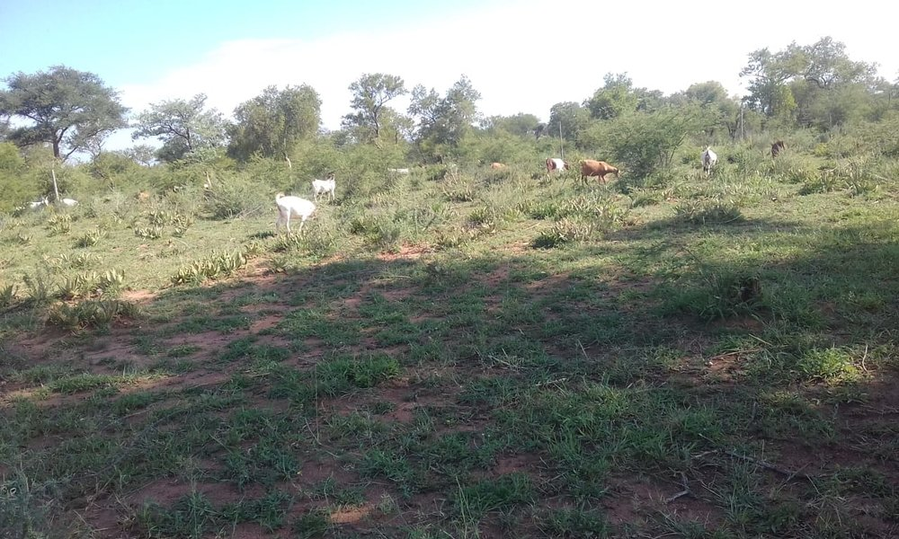 New Land for farming