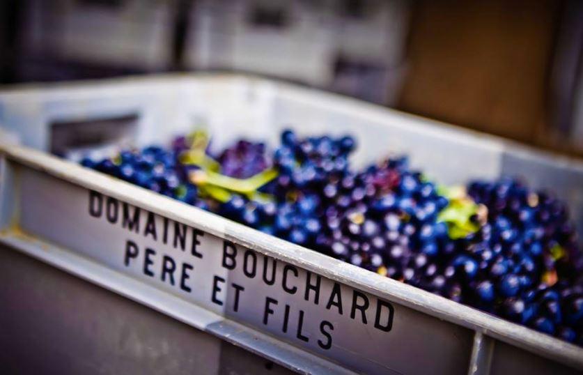Source: Bouchard Pere & Fils