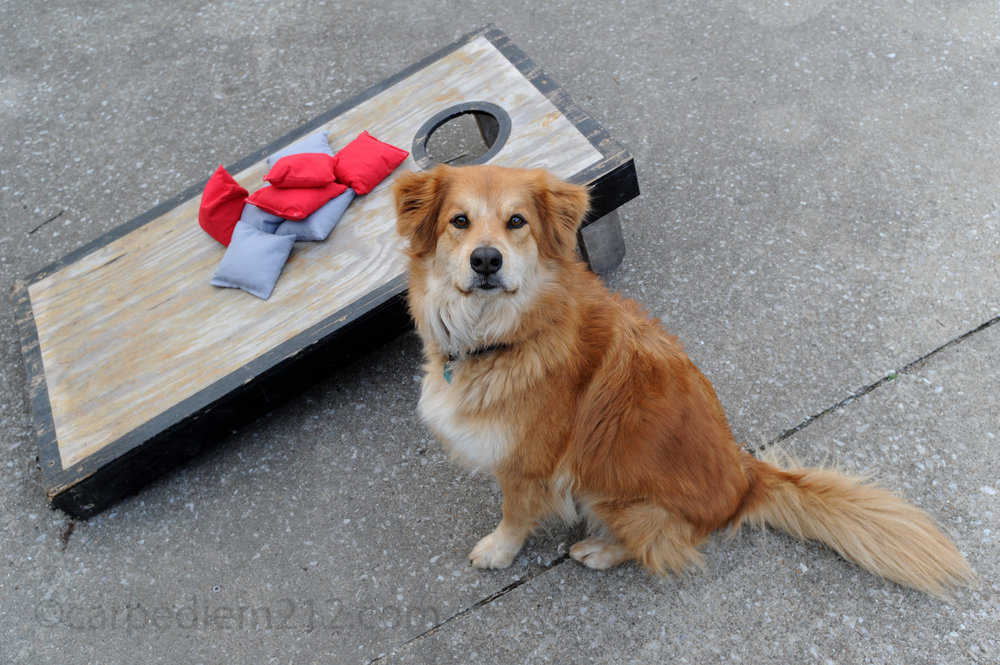 Oscar with cornhole.jpg
