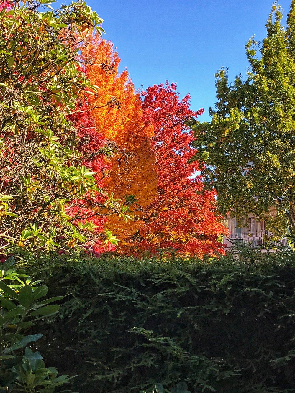vancouver fall season.JPG