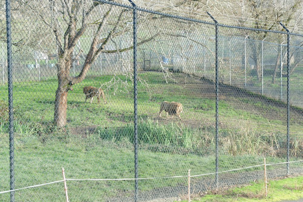 wildlife safari oregon