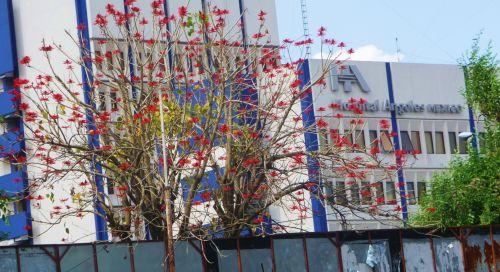spring-3