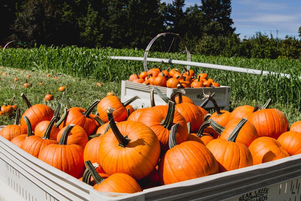 HarvestFestivalMedfordoregon-20.jpg