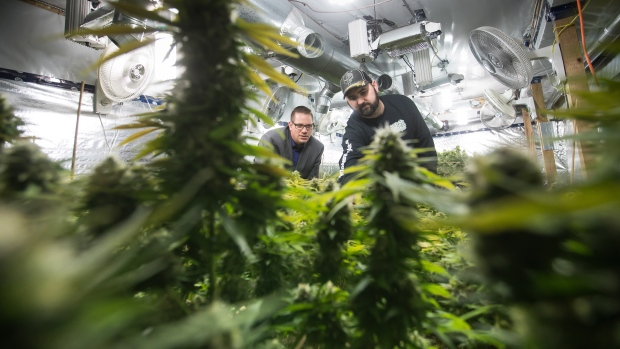 "Yan Boissonneault, left, and James Gallagher, licensed medical marijuana  growers, are seen at a legal medical grow-op they oversee, in Mission,  B.C., on Wednesday December 5, 2018. They operate a handful of small  legal medical grow-ops in British Columbia and are among the ""craft""  producers who hope to use their skills in the fledgling recreational  market by getting a new licence for microcultivation. (THE CANADIAN  PRESS / Darryl Dyck)"