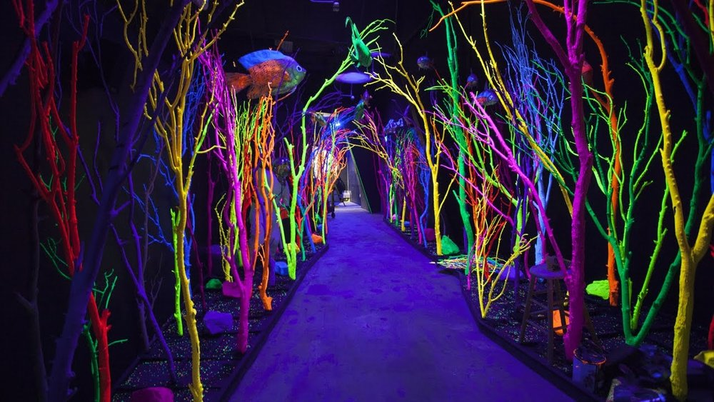 A scene from inside of Meow Wolf's House of Eternal Return exhibit. Check them out here: https://meowwolf.com/