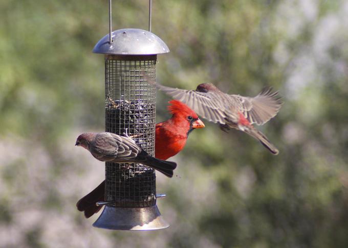 Cardinal and Company
