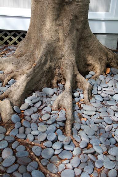 Roots meet Rocks