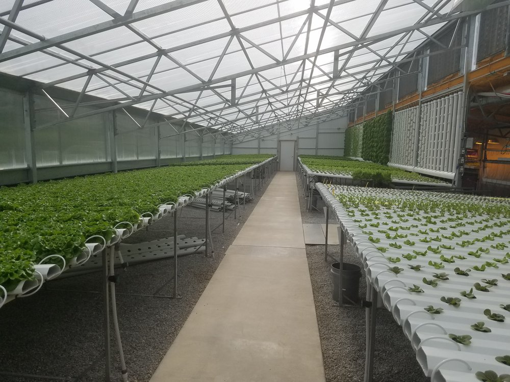 Hydroponic greenhouse for greens and herbs production.