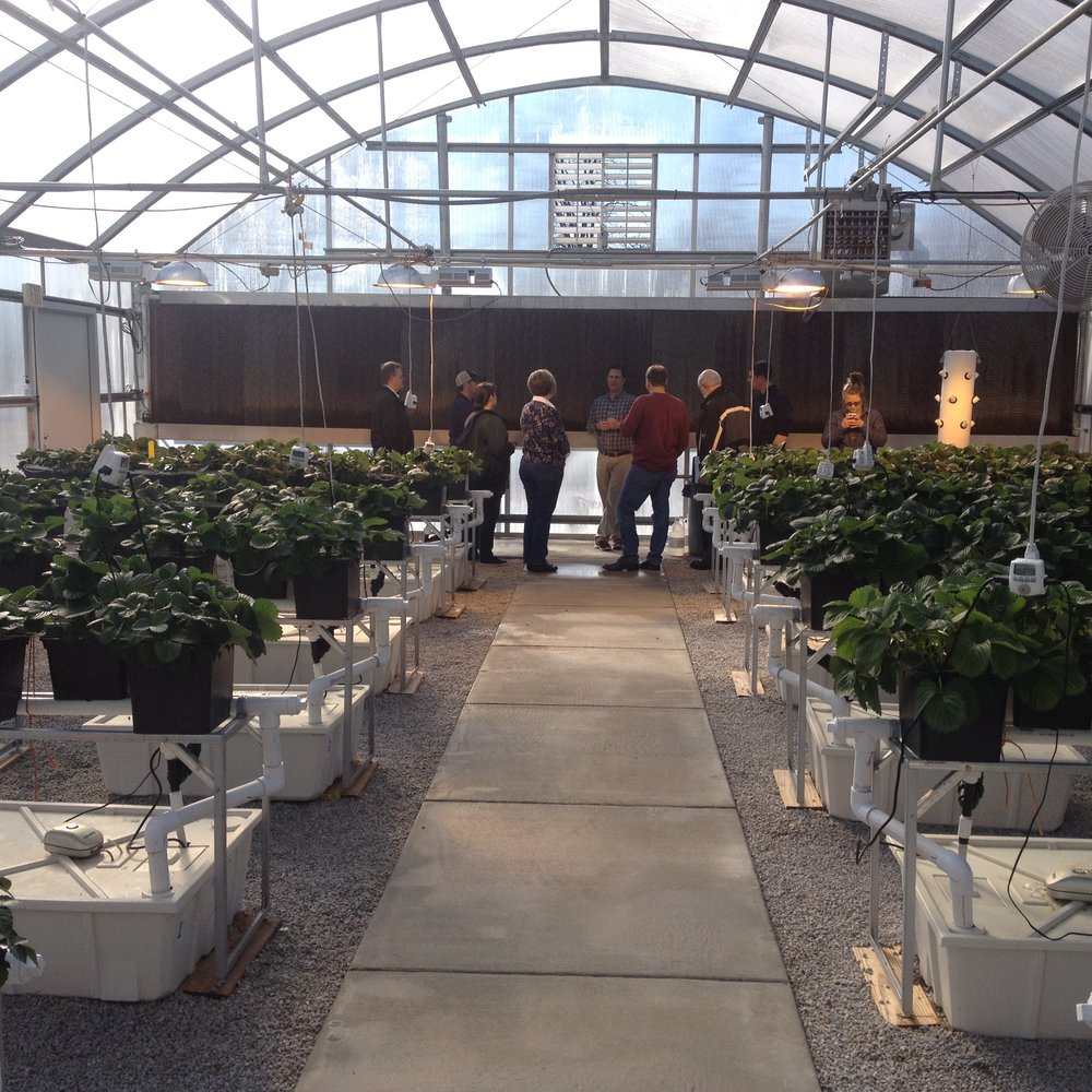 Workshop on soilless greenhouse berry production.