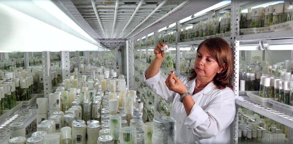 Tissue culture lab for plant micro-propagation.