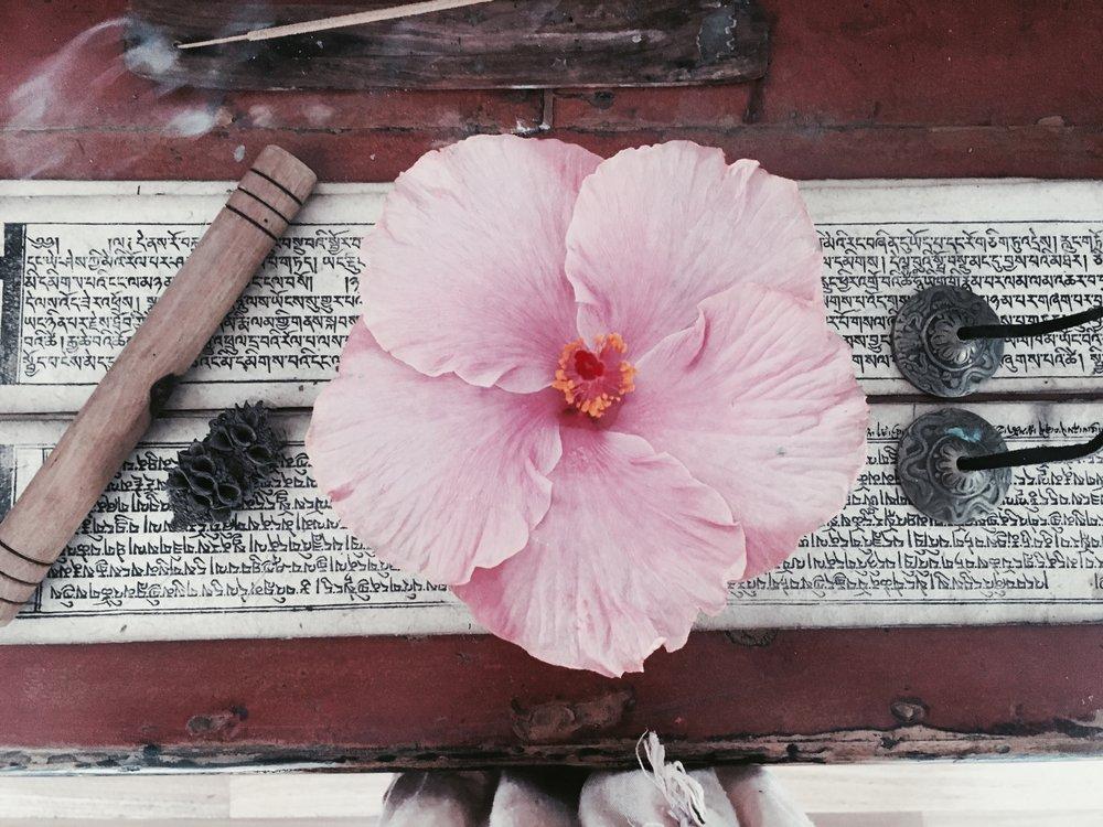 hibiscus flower.jpg