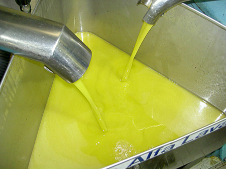 Fresh pressed and unfiltered Olive Oil