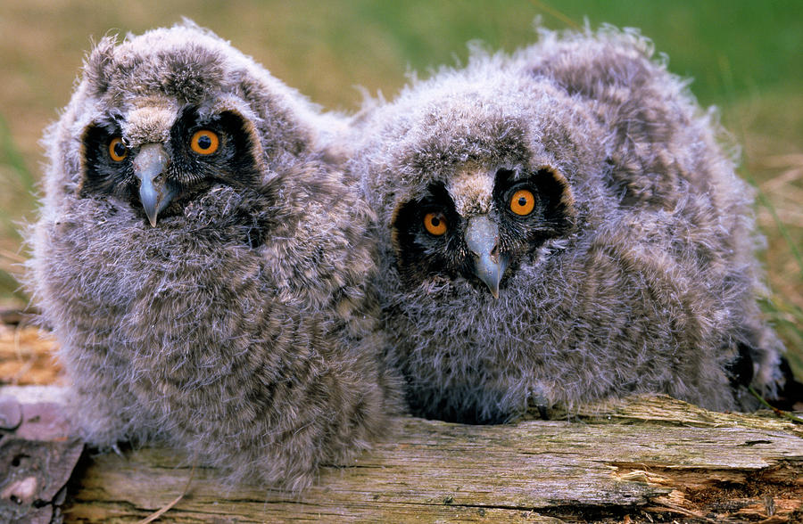 Our tips and tools are a collection of practical ideas to improve physical and mental well-being, develop a healthy lifestyle and save the turtles, the orangutans, and all the other lovely creatures in this planet, including these super ugly baby owls. -