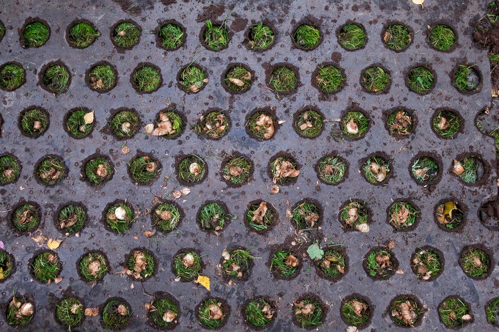 haugerudbekken_beplantning-18.jpg