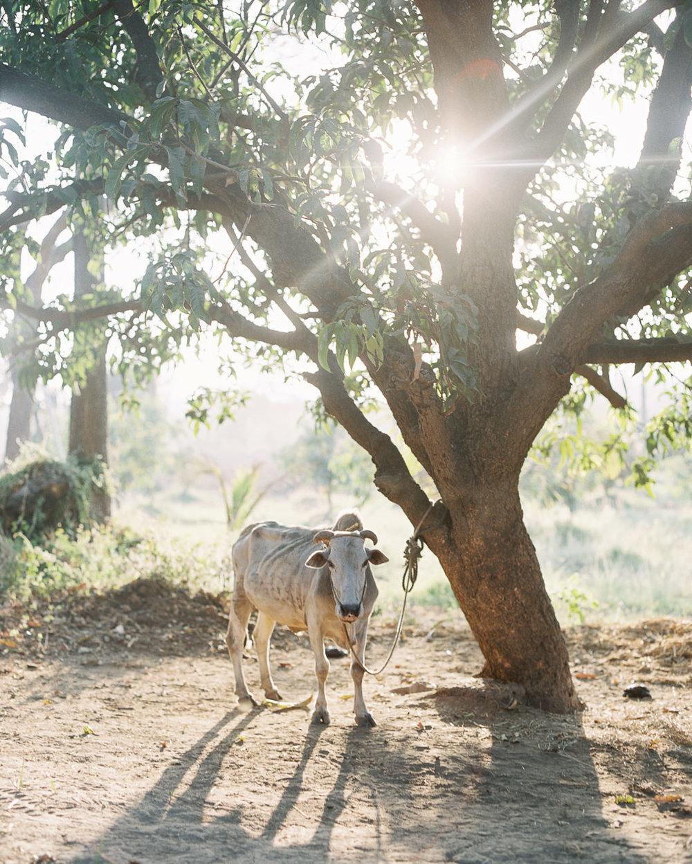 mumbai-photographe-voyage-alain-m-6.jpg