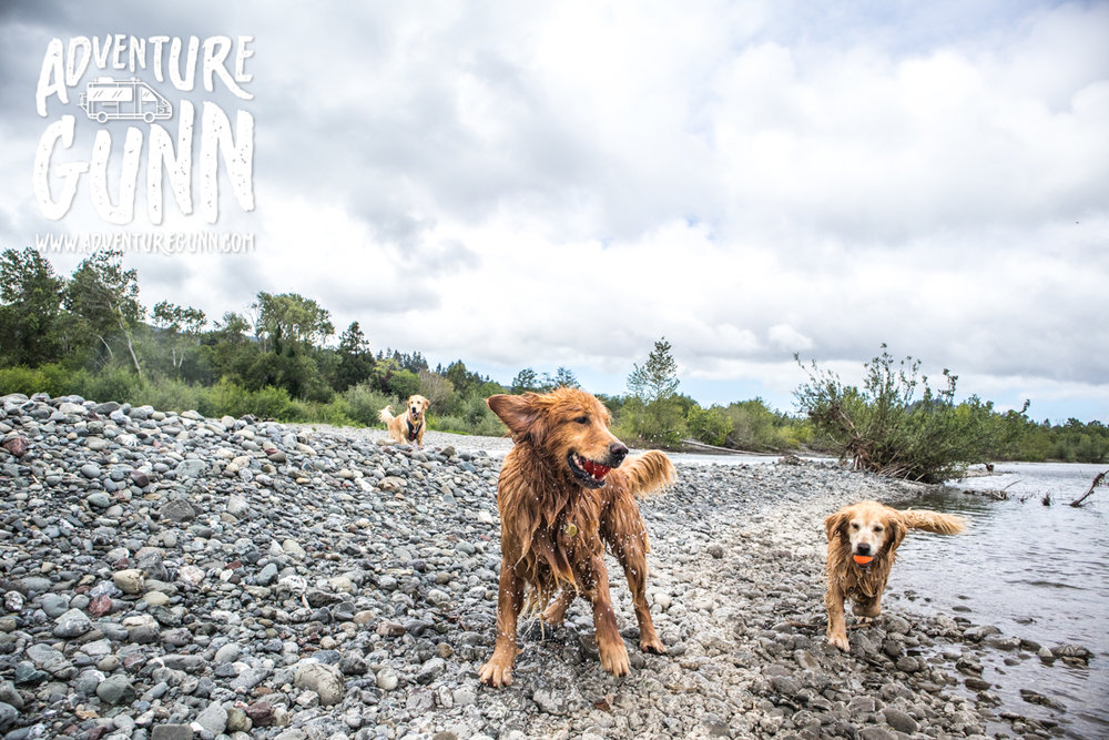 adventure-dog-0866.jpg