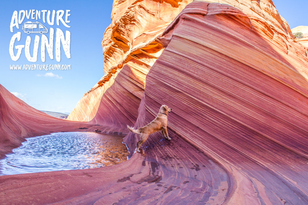 adventure-dog-1260.jpg