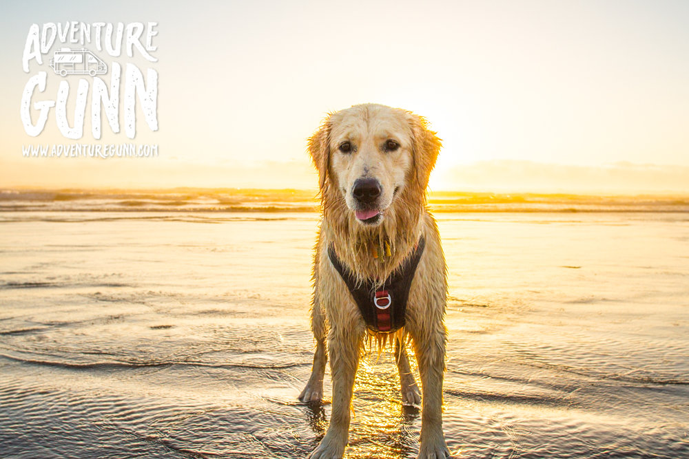 adventure-dog-3155.jpg