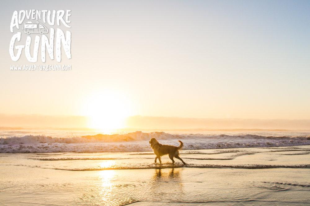 adventure-dog-3233.jpg