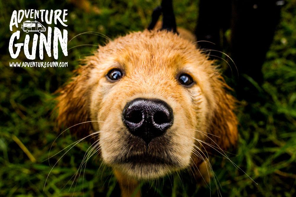 adventure-dog-3618.jpg