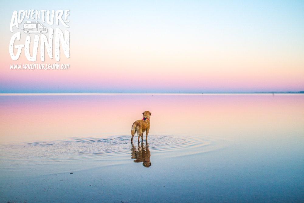 adventure-dog-5632.jpg