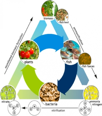 wonderful-sustainable-aquaponics-graphic-inside-awesome-aquaponic-collection-you-must-have.png