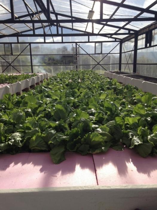 Guatemala Lettuce.jpeg