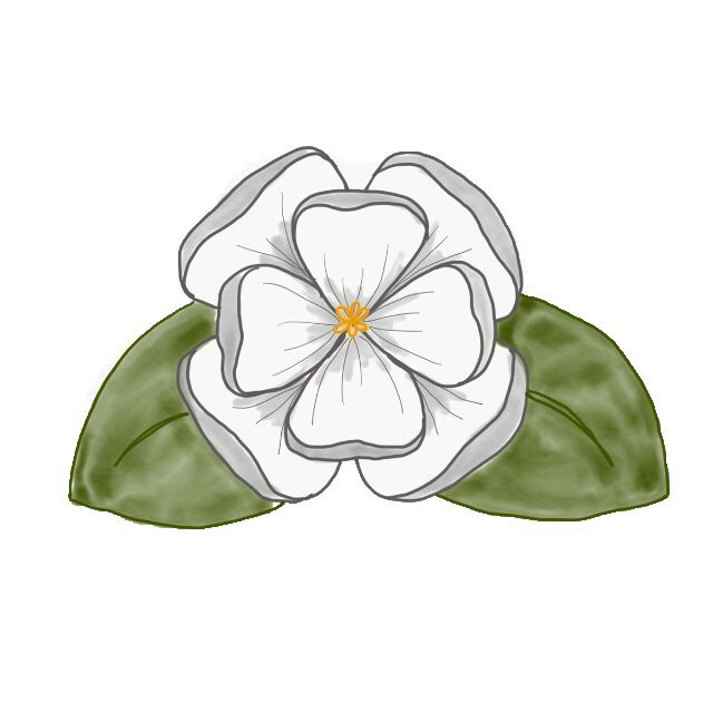 maryland state flower magnolia heather art