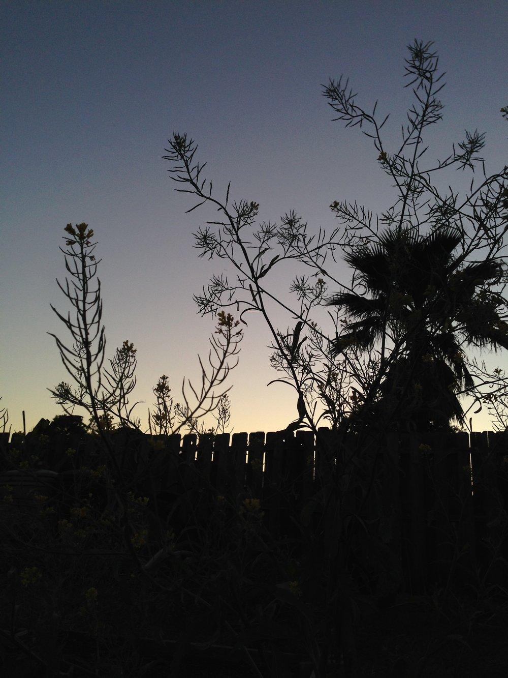 Sunsetinmomsgarden.jpg