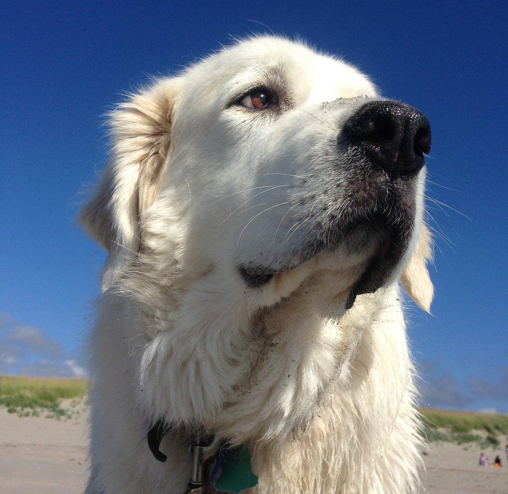 Our namesake, the original moon dog, Luna. Photo by Melissa Barcroft.
