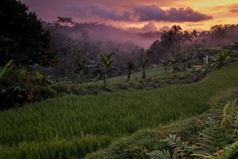 You can use the power of your finances to protect forests.   Photo credit:  Friends of the Earth