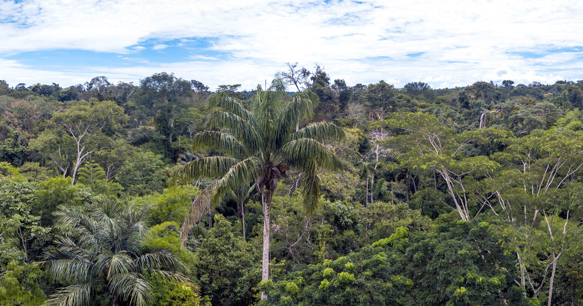 How Investors and Fund Managers Can Help Save the Rainforests with Deforestation Free Funds