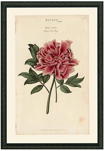 ONE KINGS LANE // PINK PEONY 43 - 1810