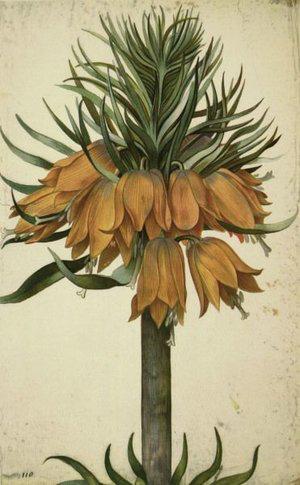 Flowers  by Georg Flegel